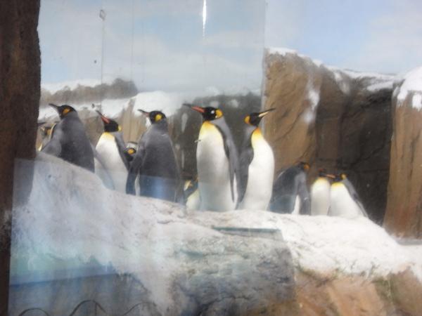 企鵝館好涼快