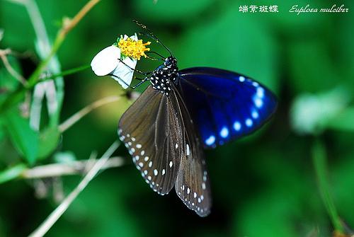 紫斑蝶遷徙國道三號雲林路段車輛請慢行-02.jpg