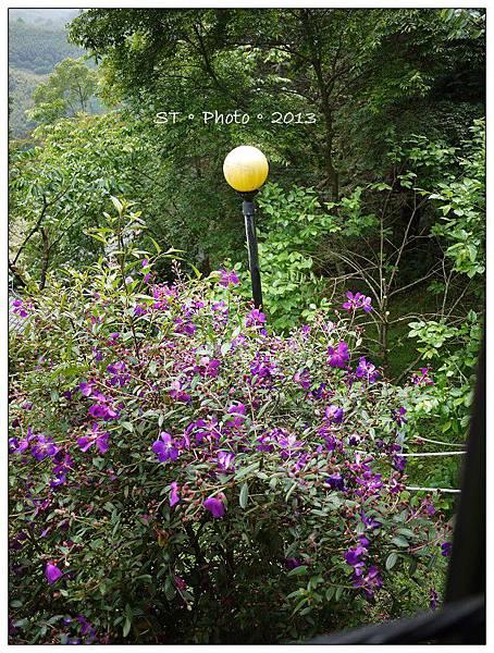 20130406-07櫻花谷露營 (26)