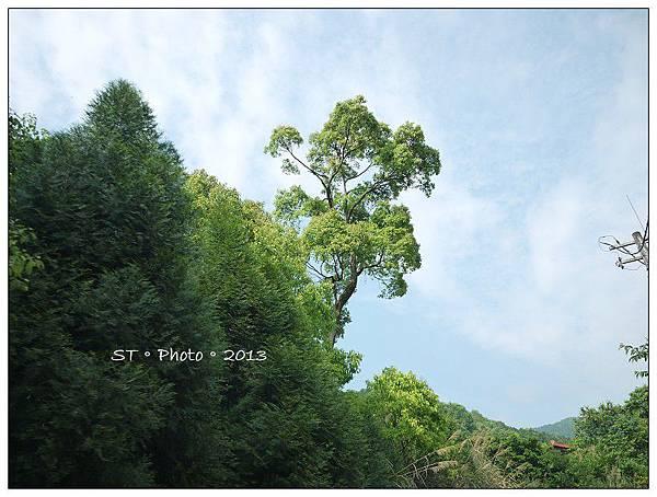 20130406-07櫻花谷露營 (70)