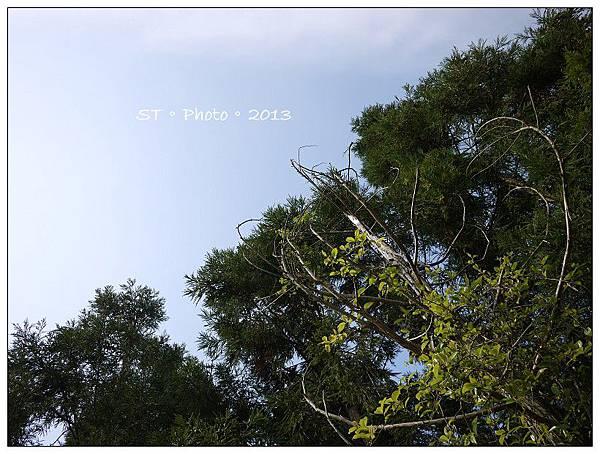 20130406-07櫻花谷露營 (77)