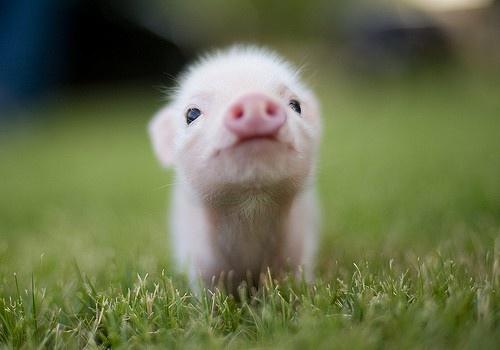 cute-baby-animal