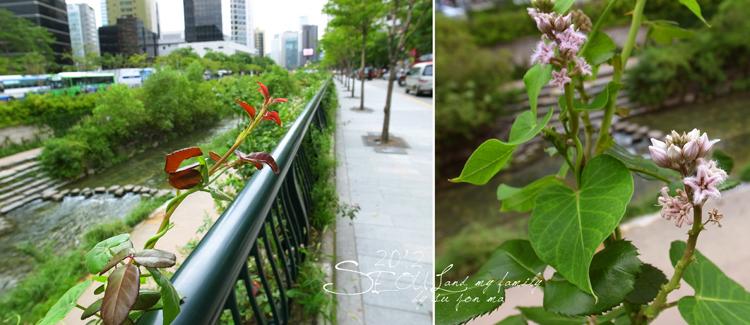 2012_8_24韓國首爾素食-清溪川-廣藏市場-樂天超市04