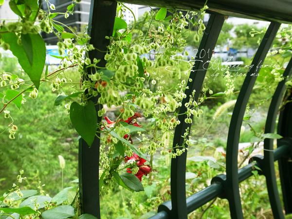 2012_8_24韓國首爾素食-清溪川-廣藏市場-樂天超市05