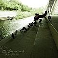 2012_8_24韓國首爾素食-清溪川-廣藏市場-樂天超市18