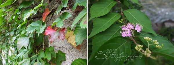 2012_8_24韓國首爾素食-清溪川-廣藏市場-樂天超市11