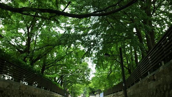 2012_8_25三清洞-cafe yung04