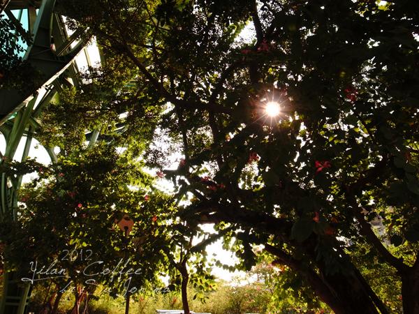 宜蘭火車站附近咖啡館-百果樹紅磚屋&舊書櫃03