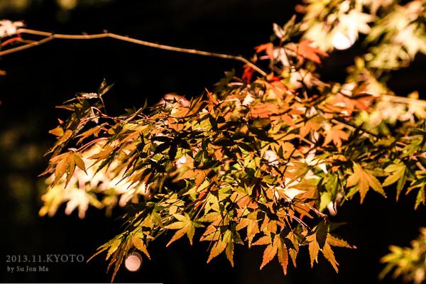 201311京都高台寺夜楓