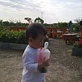 20090418-新屋花海 (28).jpg