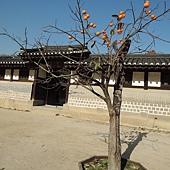 韓國 136