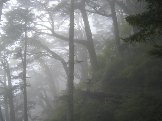 憶玉山秋之樹  ( Mt. Jade  Chia-Yi  Taiwan)
