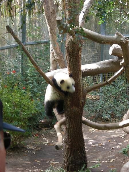 小熊貓超會亂動
