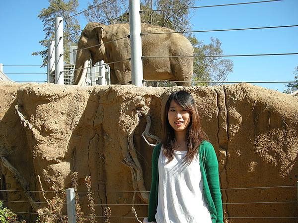 大象在我頭上