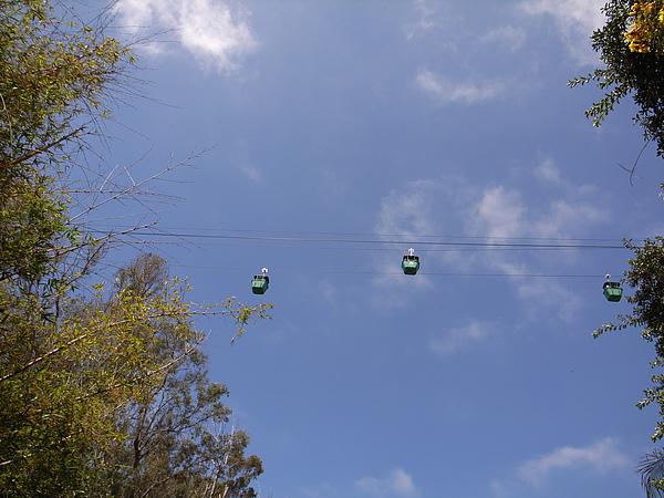 動物園纜車