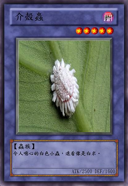 介殼蟲.jpeg
