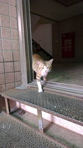 大嗓門街貓