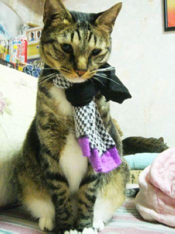 芝麻襪子圍巾.jpg