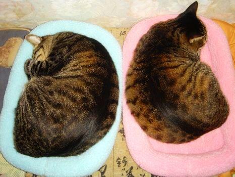 舒眠床2.jpg