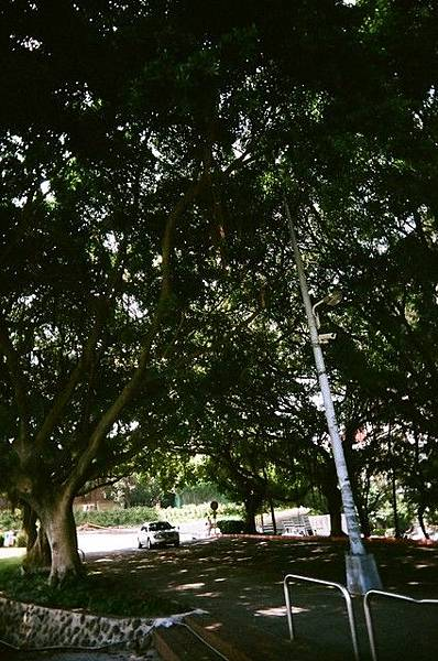 交大校門口旁邊的樹蔭