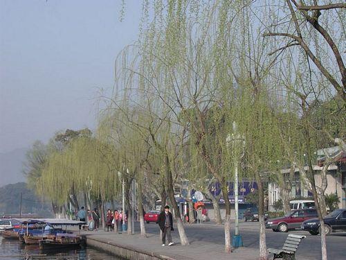 020309_西湖32柳樹新綠
