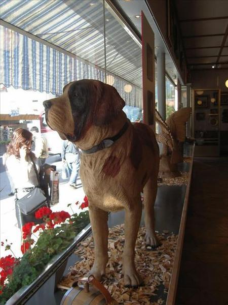 018_布里恩茲木雕店櫥窗裡的聖伯納犬(大)