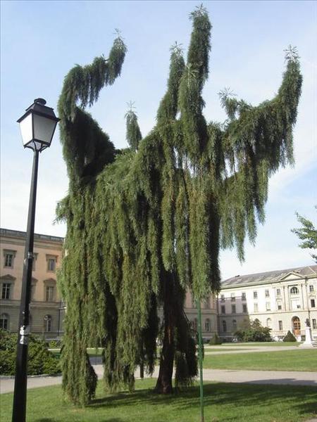 050_日內瓦大學裡的怪樹