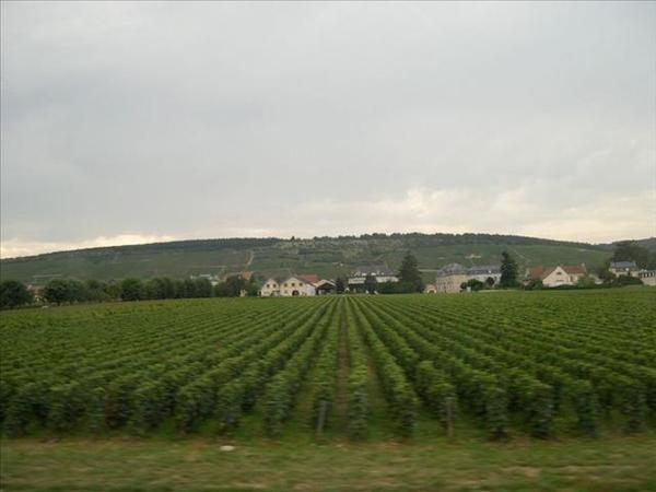 088_從奧爾良到波恩的路上-終於看到葡萄園