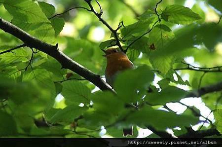 birds on the tree 2.jpg