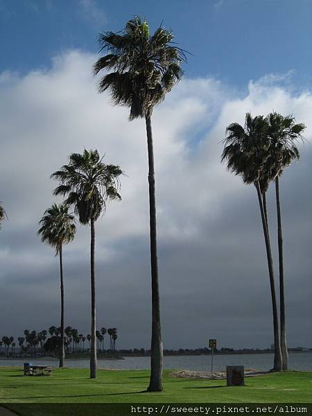 palm tree by the sea.jpg