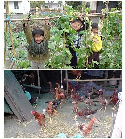 4. 阿嬤的菜園 ~店裡的青菜食材都是阿嬤自己種的,無農藥,健康又香甜!雞也是阿嬤自己養的喔。.jpg