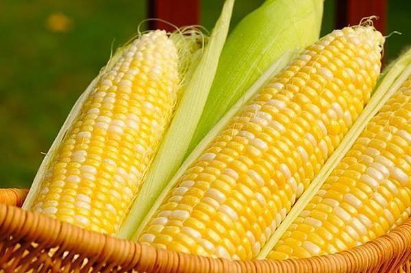 0517玉米.jpg