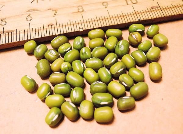 綠豆.jpg