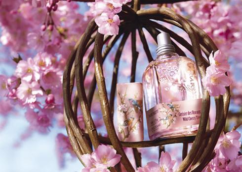 cerisier-des-oiseaux-l-occitane.jpg