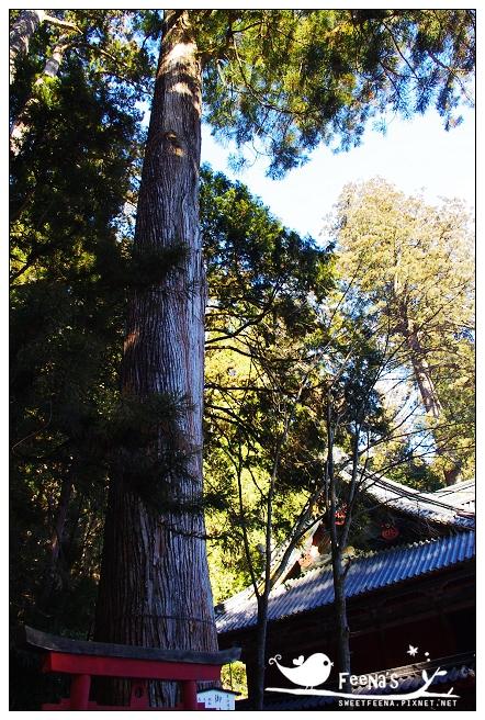 二荒山神社 (13)_nEO_IMG