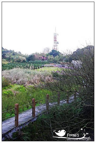 陽明山老湖田 (4)