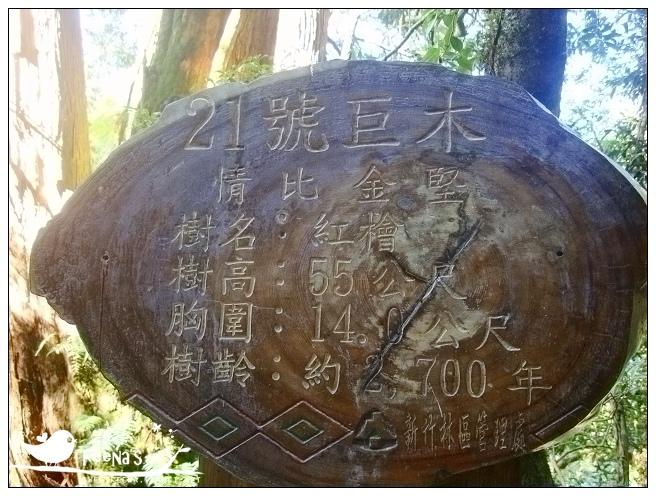 拉拉山神木區 (2)_nEO_IMG.jpg
