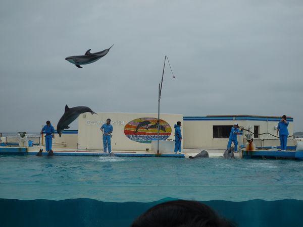 啊  我愛海豚啊!!!跳過來跳過來!
