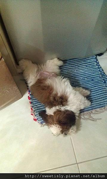 睡覺也要練飛簷走壁!