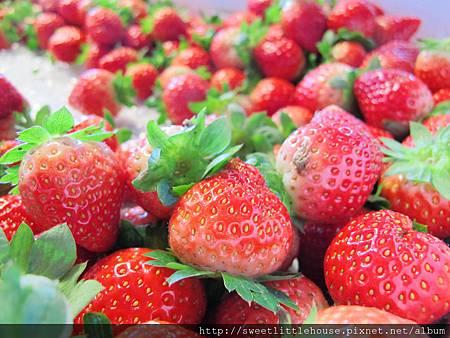 花蓮出產的草莓