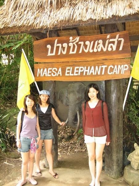 MaeSa 大象營
