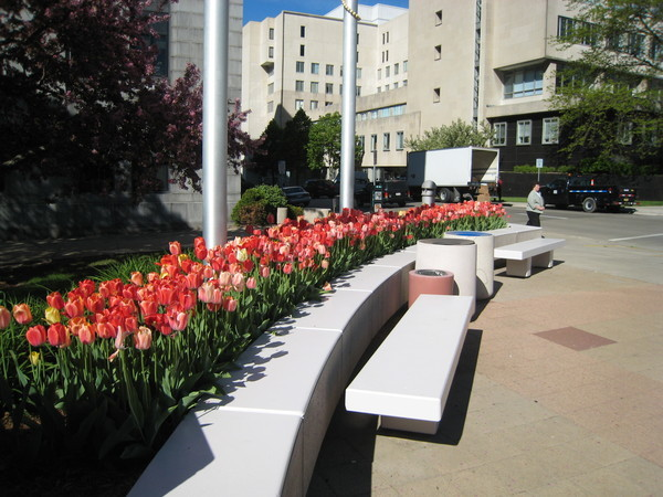 Tulips near capital