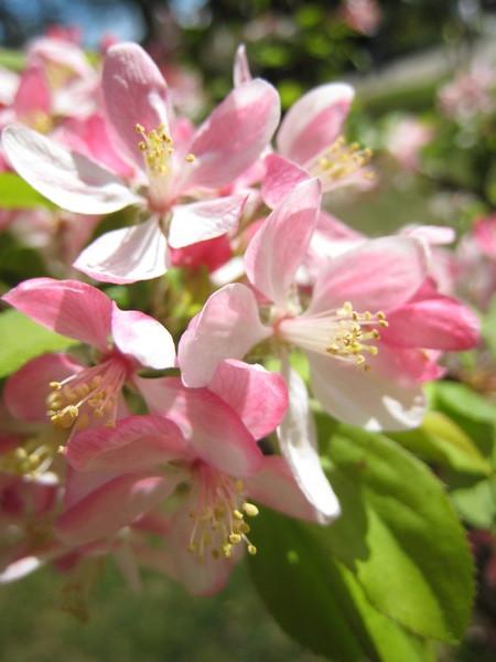 Blossom~