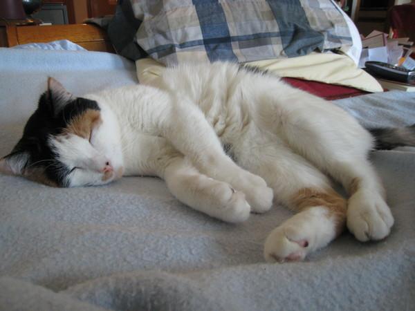 Sleeping Momo