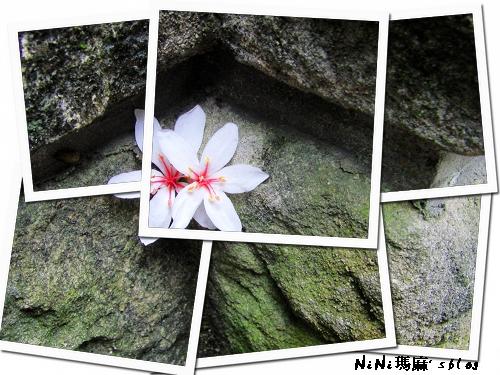 flower1.jpg