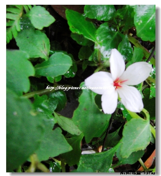 flower33.jpg