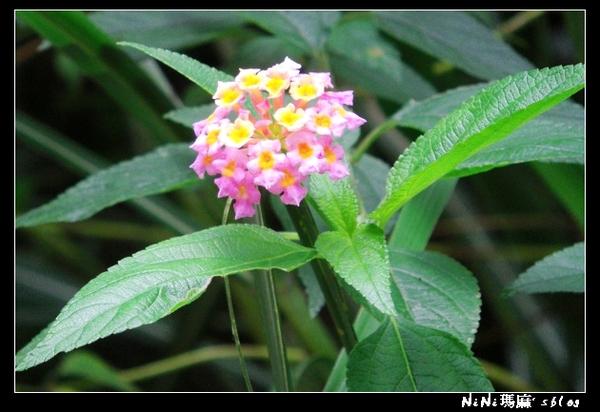 flower11.jpg