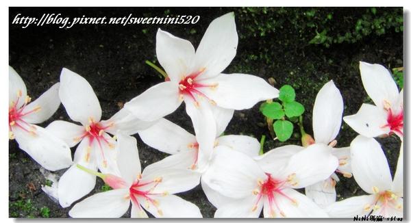 flower42.jpg