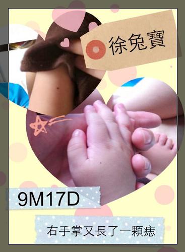 徐兔寶9m-2