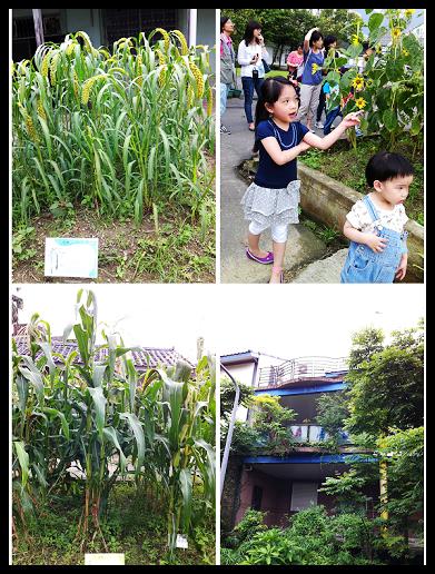 20130611 台大農場生態導覽-15